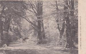 NEW FOREST , England, 1901-07; A Forest Road.  Oaks and Elms; TUCK #870