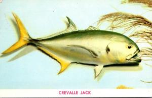 Fish Jack Crevalle 1955