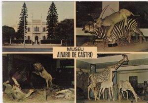 Museu Alvaro De Castro , Lourenco Marques , Mozcambique , 1950-70s ; Zebra , ...