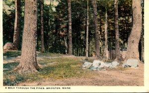 Maine Bridgton A Walk Through The Pines