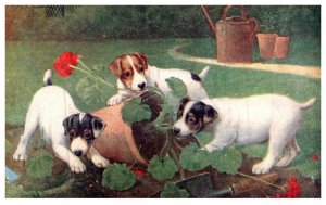Dog   ,Puppies playing with Plant
