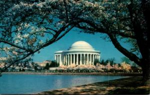 Washington D C Jefferson Memorial and Cherry Blossoms