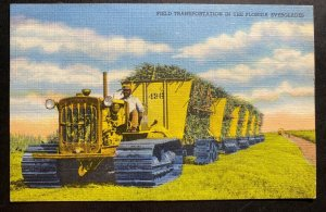 Mint Color Picture Postcard Black Americana Field Transportation In The Florida