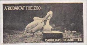 Carreras Cigarette Card Kodak At Zoo 1st Series No 48 Pelicans