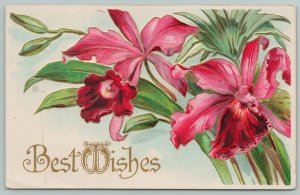 Flowers Greetings~Bold Pink Orchids~Gold Leaf~c1910 Embossed Postcard