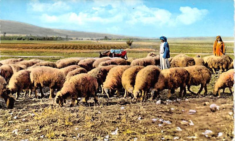 Ablah, Lebanon Postcard, Carte Postale non postcard backing, Dated 4-12-1966 ...