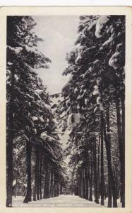 Park Bukovicke Banje Arandelovac , 1910s