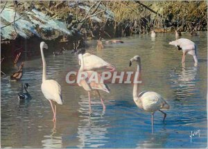 Modern Postcard Flamingos in Camargue Roses Colors and Light of France