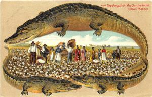 S. Langsdorf Alligator Greetings Sunny South Cotton Pickers Postcard