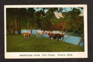 PQ Greetings Cap Chat GASPE QUEBEC CANADA Postcard Cows QC Carte Postale