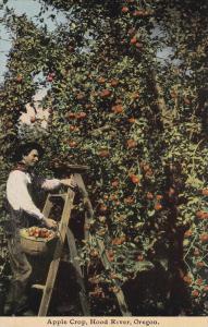 Apple Crop , Hood River , Oregon , 00-10s