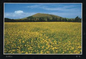 Korea - Rape Field in Spring