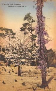 Southern Pines North Carolina~Wisteria & Dogwood~1934 Handcolored Postcard