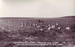 PRESQUE ISLE Maine - REAL PHOTO of Harvesting potatoes 1930s era
