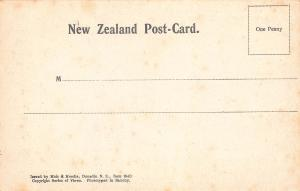 A Fine Cabbage Tree, New Zealand, Early Postcard, Unused