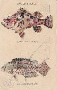 Fishes , HAWAII , 1910