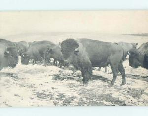 Pre-1980 JEAN CLARK BUFFALO RANCH Oak Valley & Elk City & Independence KS hn0195