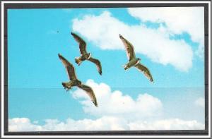 Sea Gulls In Flight - [MX-084]