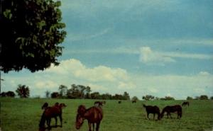 Castleton Farm Iron Works Pike Lexington KY 1966