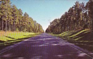 Minnesota Itasca County Avenue Of Pines On Highway 46 In Chippewa National Fo...