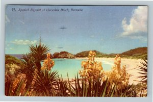 Horseshoe Beach Bermuda, Spanish Bayonet Chrome c1954 Postcard