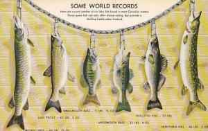 World record fish caught in lakes of Canada , 40-60s