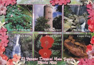 Puerto Rico El Yunque Tropical Rain Forest