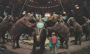 RINGLING BROS. & BARNUM & BAILEY CIRCUS, 1970s; Elephantastic Excitement