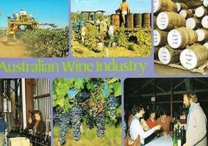 Australia Wine Trade Bottle Alcohol Making Photo Multi View Postcard