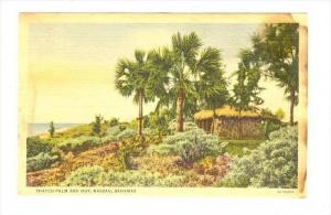 Thatch Palm & Hut, Nassau , Bahamas, 30-40s