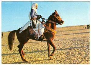Southern Tunisia, Cavalier harnesses, Sud Tunisien, Cavalier harnache unused