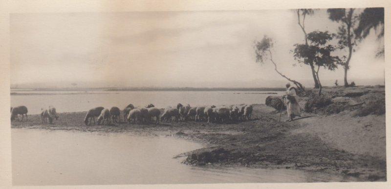 RP: EGYPT , 00-10s ; Shepherd & Flock on the Nile border