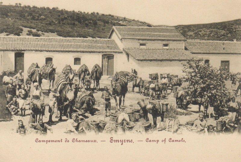 SMYRNE , Turkey , 1890s ; Camp of Camels