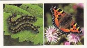 Grandee Vintage Cigarette Card Britains Wayside Wildllife No 11 Small Tortois...