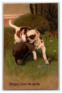 Pit bull American Staffordshire bull terrier dog