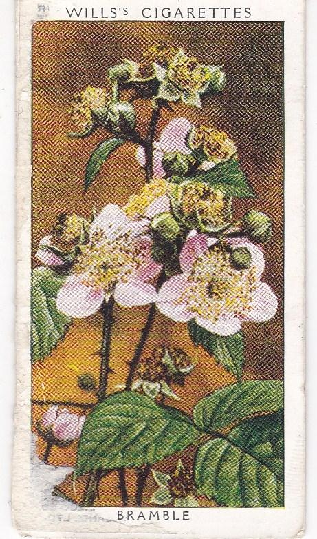 Cigarette Cards Wills Wild Flowers 2nd Series No 15 Bramble
