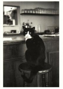 Cat at a Bar Stool in London by Edouard Golbin Postcard
