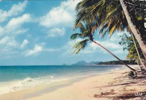 Caribbean Beach Scene, Antilles Radieuses, The Enchanting Caribbean, Coco-nut...
