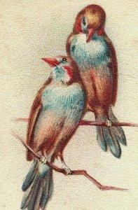 1880s-90s Arm & Hammer Beautiful Birds Series Waxbill Lot Of 5 P222