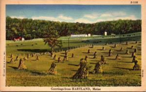 Maine Greetings From Hartland Curteich