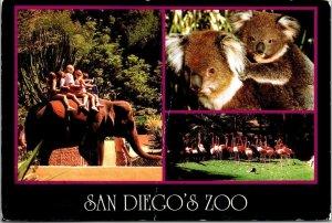 Postcard San Diego Zoo Elephant Koala Bear Flamingo 1998 California NY  1000