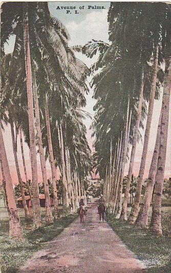 Philippines Manila Avenue Of Palms