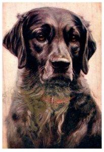 Dog , Labrador