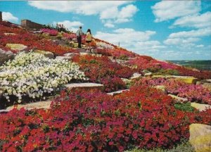 Canada Tiers Of Spectacular Blooms Cover The Slopes Of Beautiful Sam Lawrence...