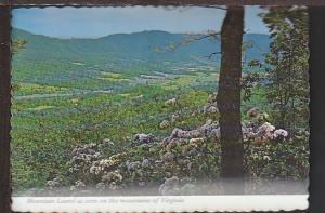 Mountain Laurels VA Postcard BIN