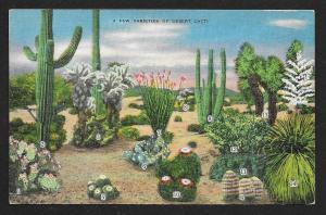 Cactus 14 different Varieties on one card unused c1930s