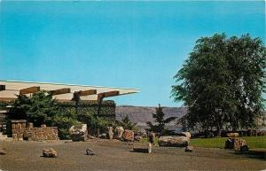 Vantage Wash.~Museum at Ginkgo Petrified Forest~Petrified Logs Outside~1960s