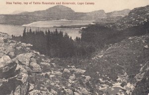 CAPE TOWN , South Africa , 1900-10s ; Disa Valley