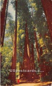 Muir Woods - San Francisco, CA