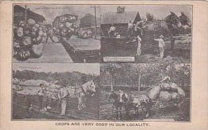 Giant Crops Multi View 1913